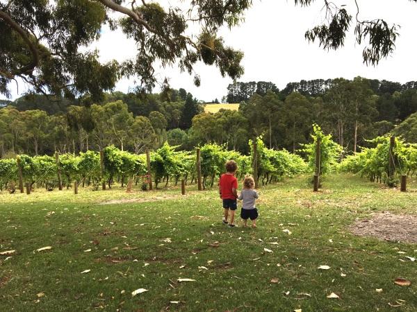Children walking to vines at Polperro